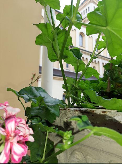 flores no convento 3