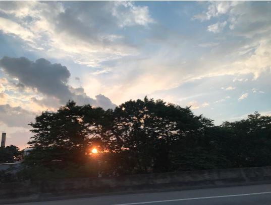 sol atras do arbusto