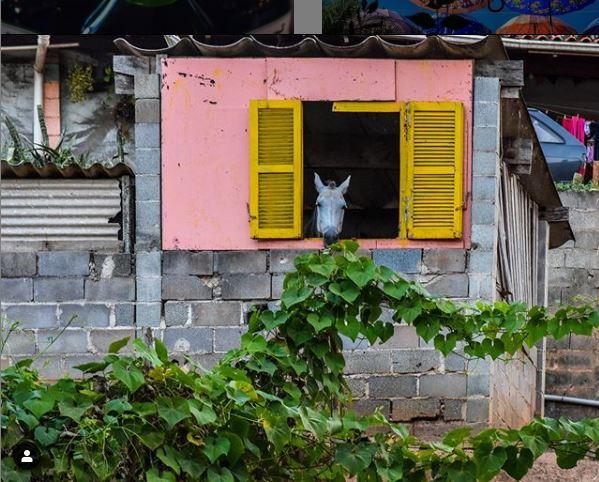 cavalo na janela