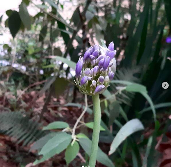 flores da wilza