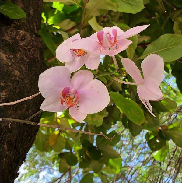 flor Yara